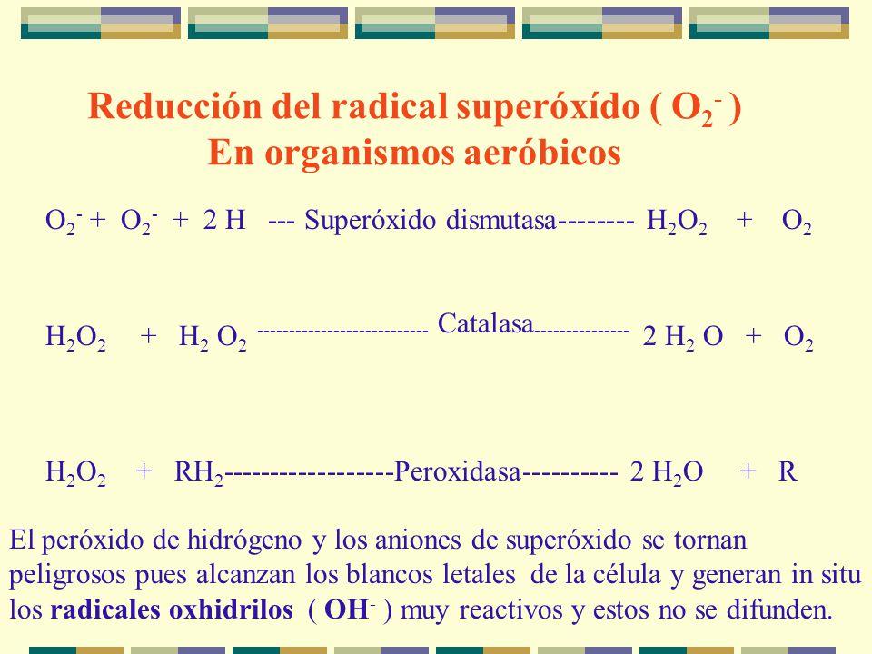 O 2 - + O 2 - + 2 H --- Superóxido dismutasa-------- H 2 O 2 + O 2 H 2 O 2 + H 2 O 2 --------------------------- Catalasa --------------- 2 H 2 O + O