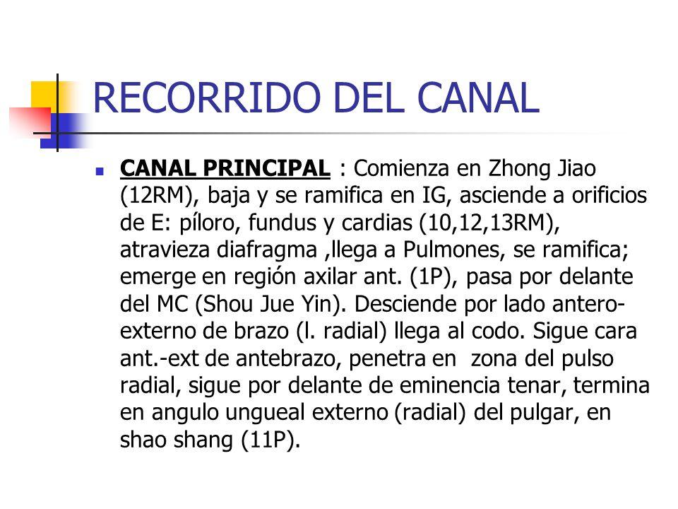 RECORRIDO DEL CANAL CANAL PRINCIPAL : Comienza en Zhong Jiao (12RM), baja y se ramifica en IG, asciende a orificios de E: píloro, fundus y cardias (10