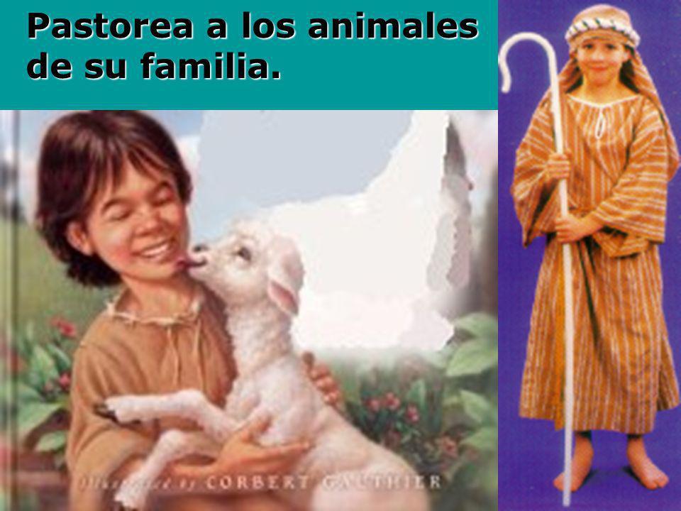 Pastorea a los animales de su familia.