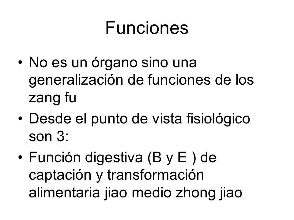 Funciones No es un órgano sino una generalización de funciones de los zang fu Desde el punto de vista fisiológico son 3: Función digestiva (B y E ) de