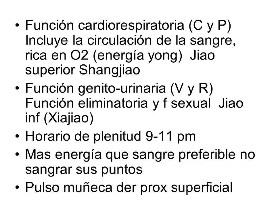 Función cardiorespiratoria (C y P) Incluye la circulación de la sangre, rica en O2 (energía yong) Jiao superior Shangjiao Función genito-urinaria (V y