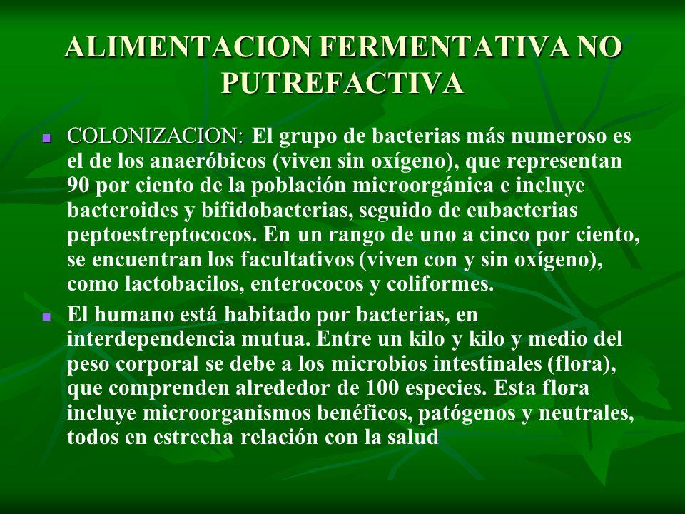 ALIMENTACION FERMENTATIVA NO PUTREFACTIVA COLONIZACION: COLONIZACION: El grupo de bacterias más numeroso es el de los anaeróbicos (viven sin oxígeno),