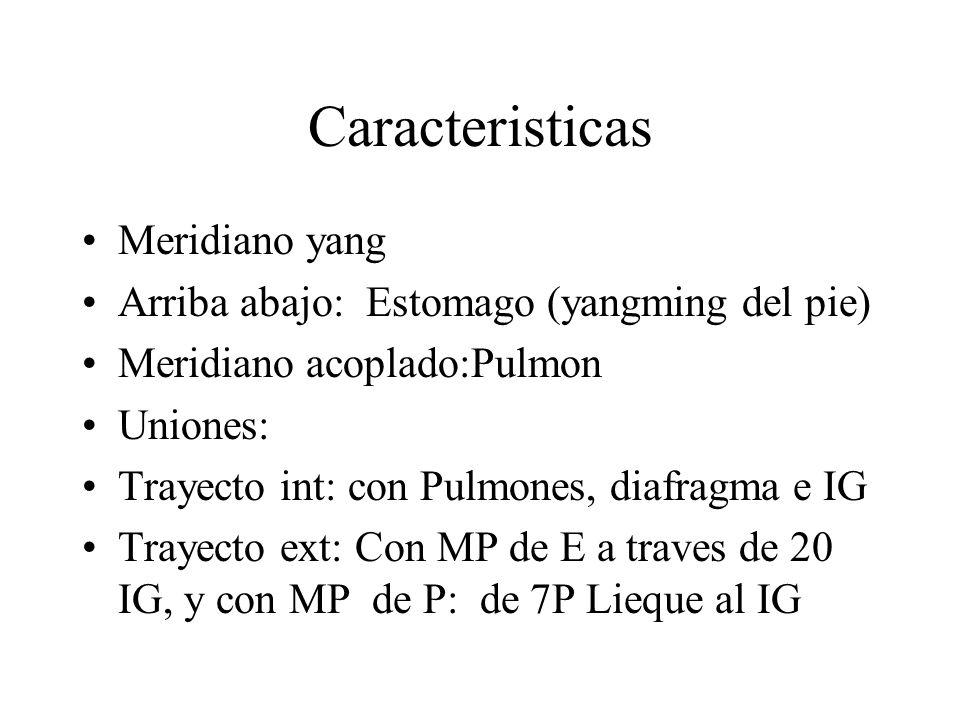 Caracteristicas Meridiano yang Arriba abajo: Estomago (yangming del pie) Meridiano acoplado:Pulmon Uniones: Trayecto int: con Pulmones, diafragma e IG