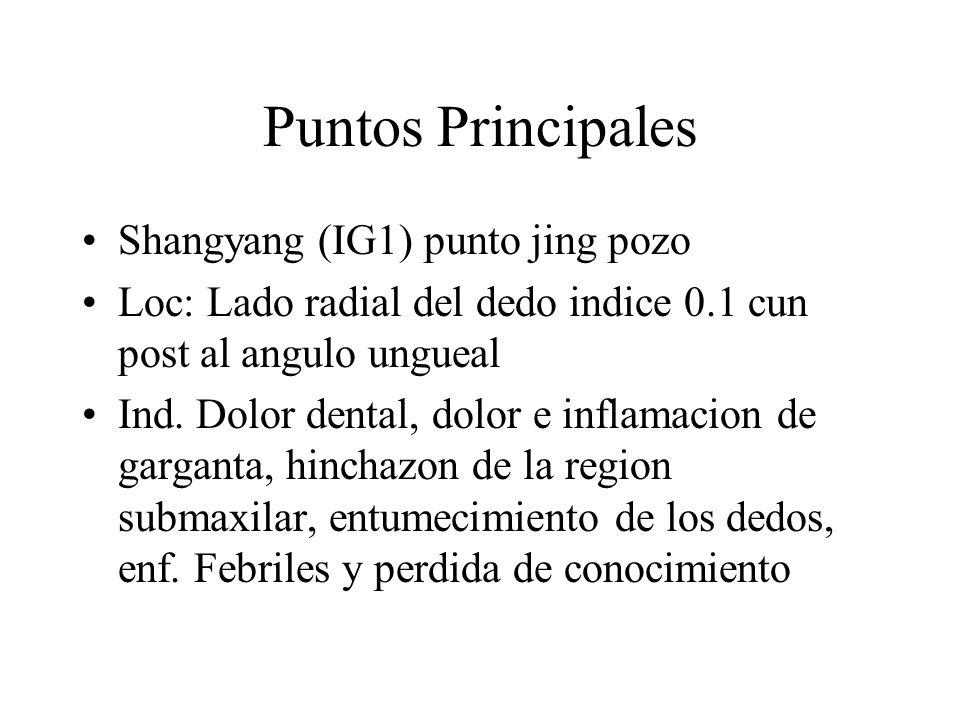 Puntos Principales Shangyang (IG1) punto jing pozo Loc: Lado radial del dedo indice 0.1 cun post al angulo ungueal Ind. Dolor dental, dolor e inflamac