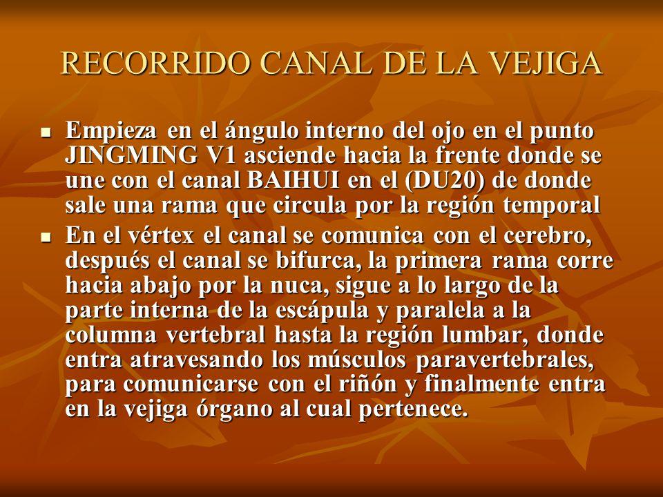 RECORRIDO CANAL DE LA VEJIGA Empieza en el ángulo interno del ojo en el punto JINGMING V1 asciende hacia la frente donde se une con el canal BAIHUI en