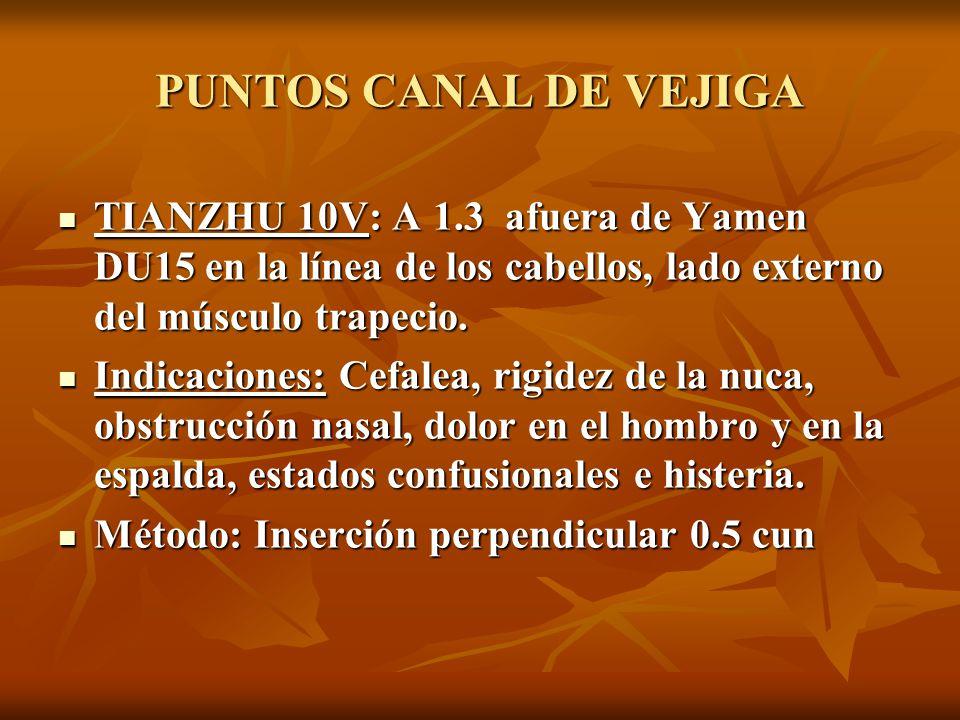 TIANZHU 10V: A 1.3 afuera de Yamen DU15 en la línea de los cabellos, lado externo del músculo trapecio. TIANZHU 10V: A 1.3 afuera de Yamen DU15 en la
