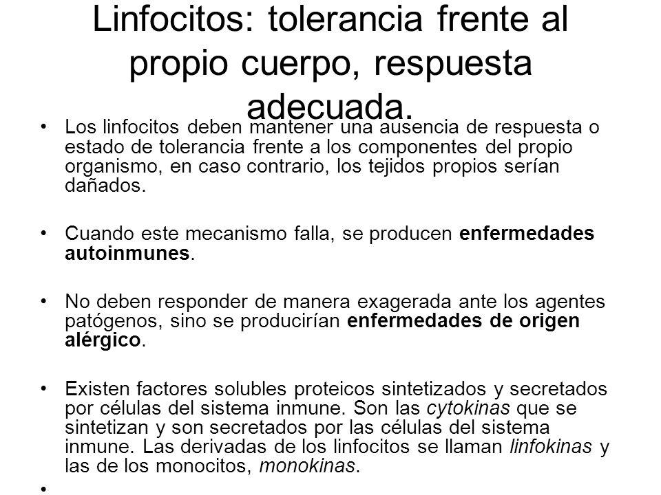 Linfocitos Los linfocitos están distribuidos por todo el organismo, en constante circulación y en forma de órganos delimitados o de acumulaciones difu