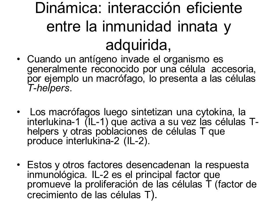 Linfocitos: tolerancia frente al propio cuerpo, respuesta adecuada. Los linfocitos deben mantener una ausencia de respuesta o estado de tolerancia fre