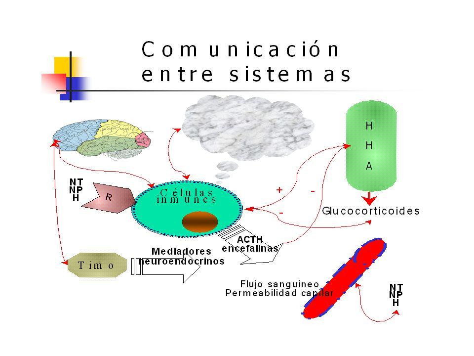 PNI_MEDICINA MENTE-CUERPO La Psiconeuroinmunología, ha demostrado que nuestros estados mentales están en íntima relación con nuestros estados físicos