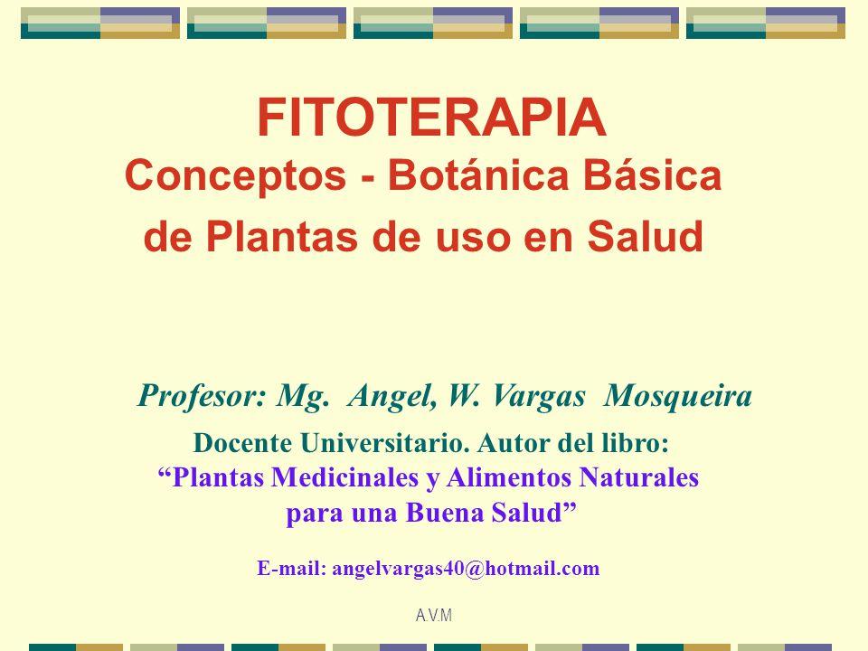 A.V.M FITOTERAPIA Conceptos - Botánica Básica de Plantas de uso en Salud Profesor: Mg. Angel, W. Vargas Mosqueira Docente Universitario. Autor del lib