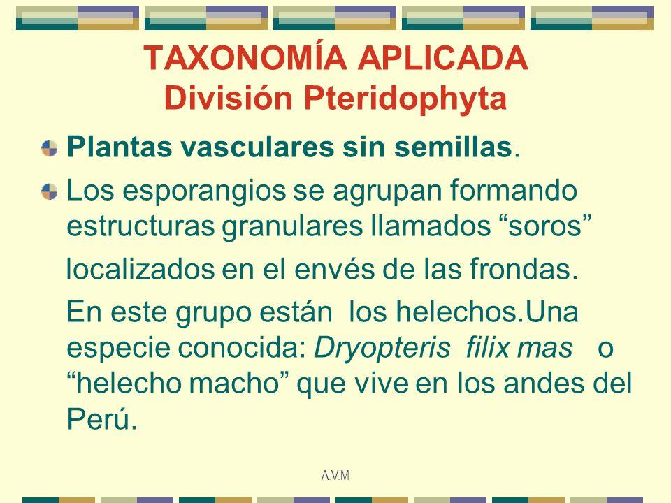 A.V.M TAXONOMÍA APLICADA División Pteridophyta Plantas vasculares sin semillas. Los esporangios se agrupan formando estructuras granulares llamados so