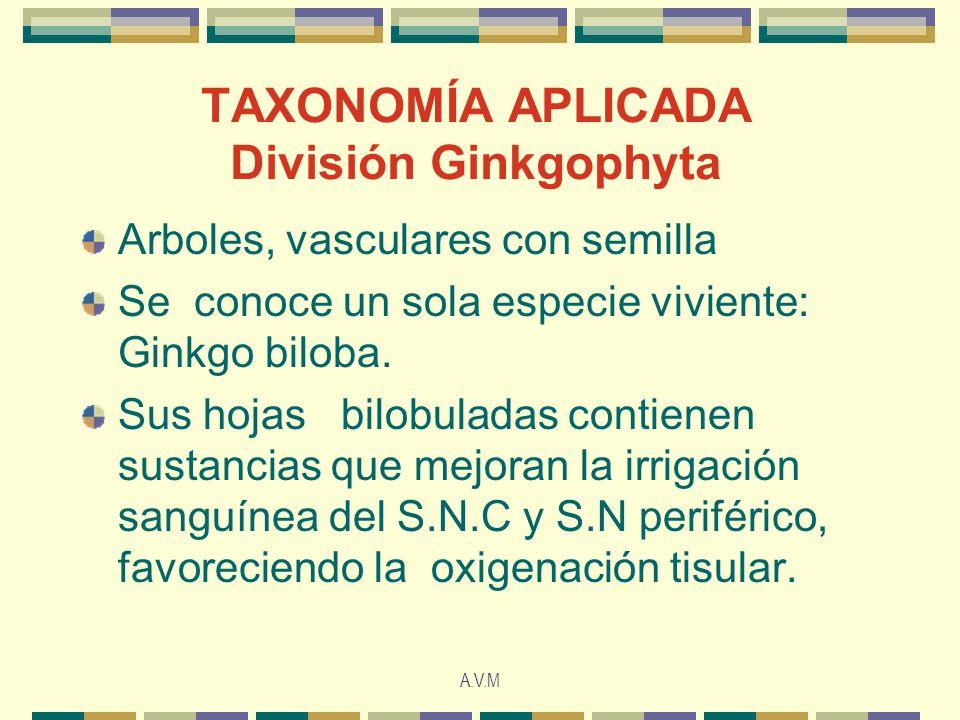 A.V.M TAXONOMÍA APLICADA División Ginkgophyta Arboles, vasculares con semilla Se conoce un sola especie viviente: Ginkgo biloba. Sus hojas bilobuladas