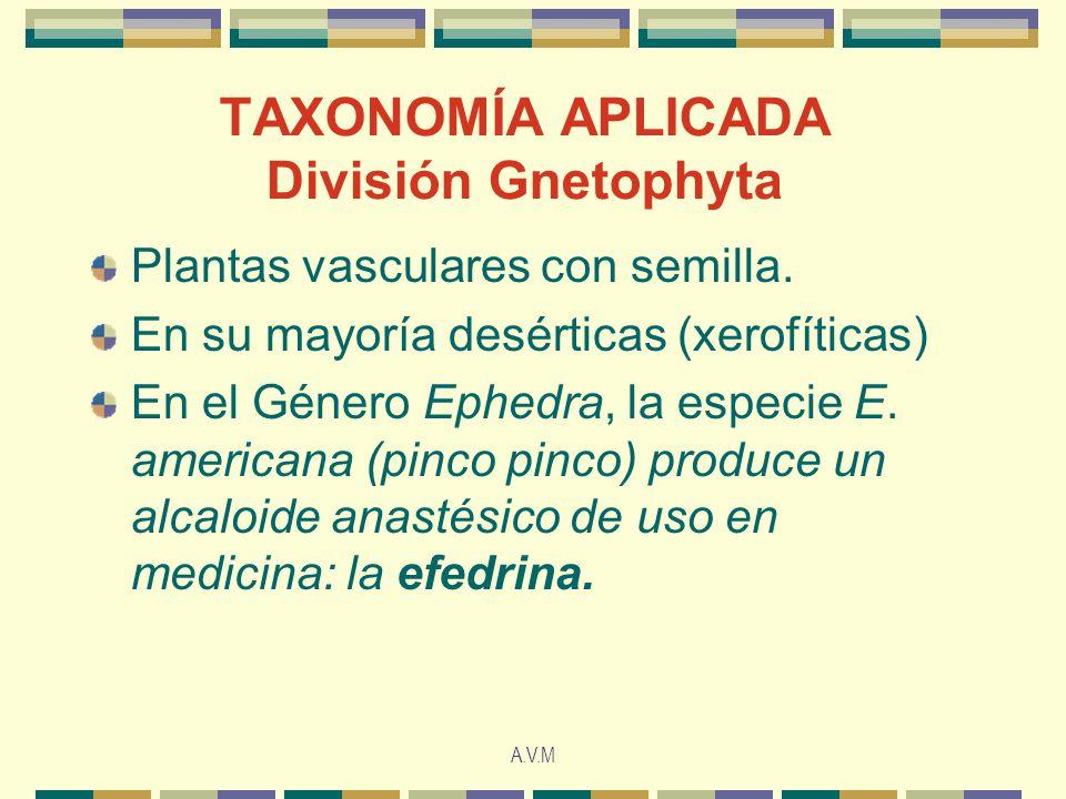 A.V.M TAXONOMÍA APLICADA División Gnetophyta Plantas vasculares con semilla.