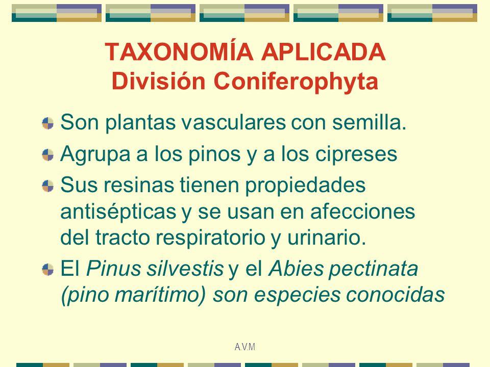 A.V.M TAXONOMÍA APLICADA División Coniferophyta Son plantas vasculares con semilla. Agrupa a los pinos y a los cipreses Sus resinas tienen propiedades