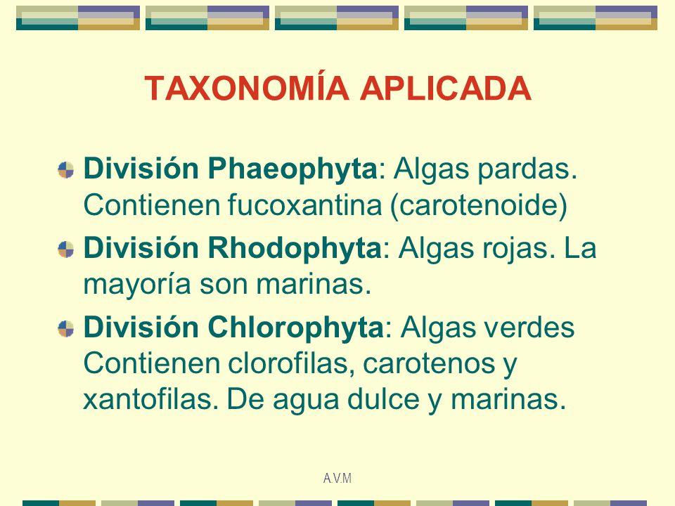 A.V.M TAXONOMÍA APLICADA División Phaeophyta: Algas pardas. Contienen fucoxantina (carotenoide) División Rhodophyta: Algas rojas. La mayoría son marin