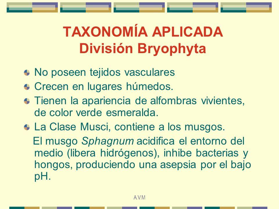A.V.M TAXONOMÍA APLICADA División Bryophyta No poseen tejidos vasculares Crecen en lugares húmedos. Tienen la apariencia de alfombras vivientes, de co