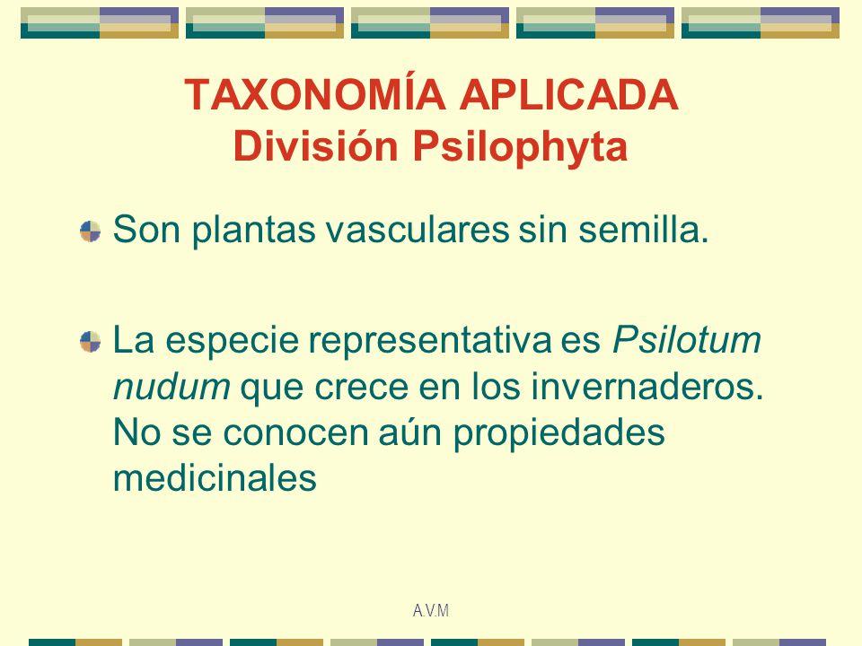 A.V.M TAXONOMÍA APLICADA División Psilophyta Son plantas vasculares sin semilla. La especie representativa es Psilotum nudum que crece en los invernad