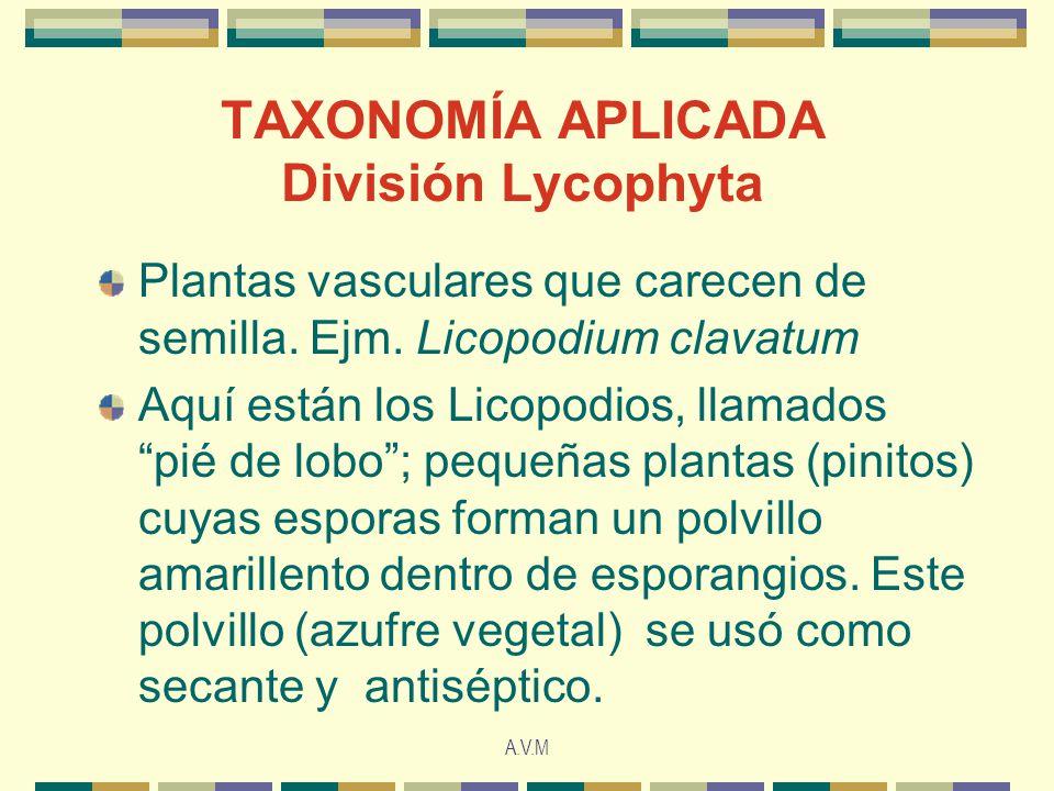 A.V.M TAXONOMÍA APLICADA División Lycophyta Plantas vasculares que carecen de semilla. Ejm. Licopodium clavatum Aquí están los Licopodios, llamados pi