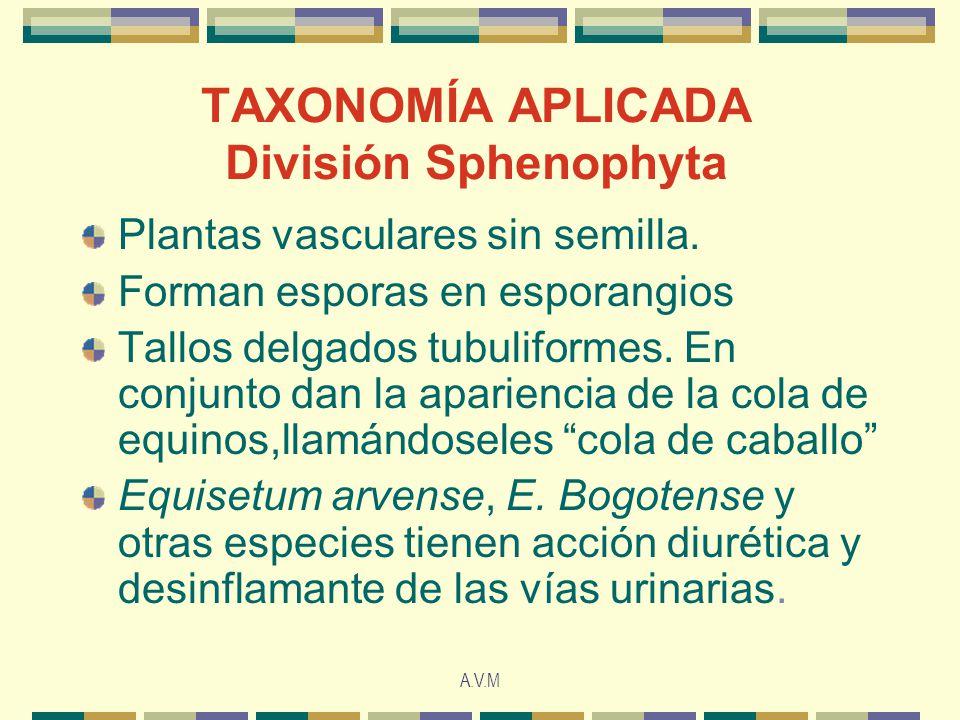 A.V.M TAXONOMÍA APLICADA División Sphenophyta Plantas vasculares sin semilla. Forman esporas en esporangios Tallos delgados tubuliformes. En conjunto