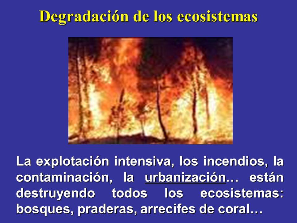Degradación de los ecosistemas La explotación intensiva, los incendios, la contaminación, la urbanización… están destruyendo todos los ecosistemas: bosques, praderas, arrecifes de coral…