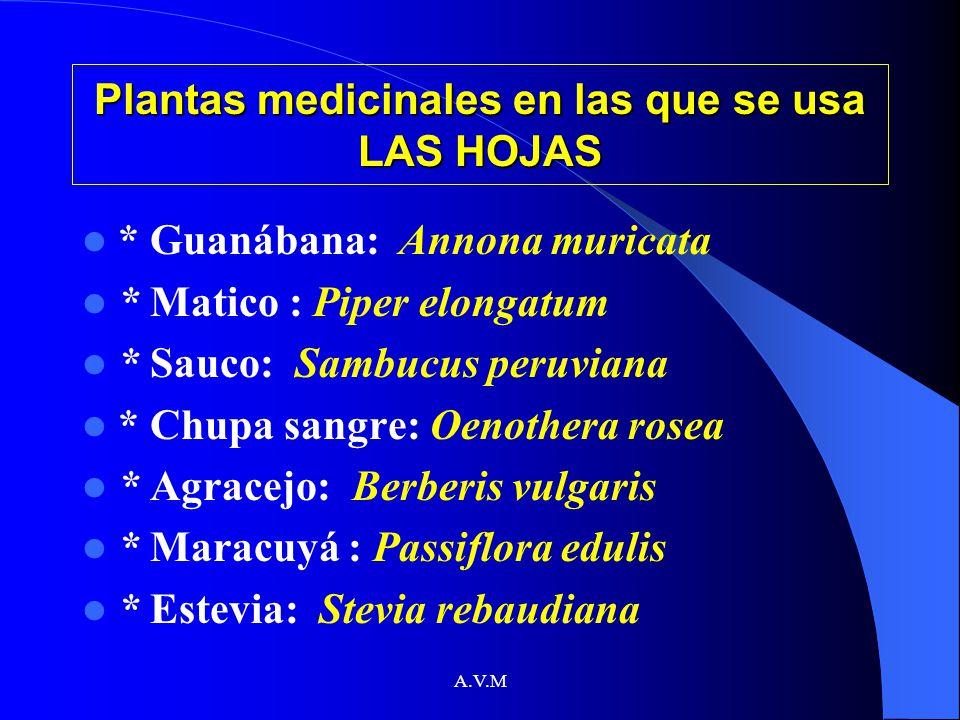 A.V.M Plantas medicinales en las que se usa LAS HOJAS * Guanábana: Annona muricata * Matico : Piper elongatum * Sauco: Sambucus peruviana * Chupa sang