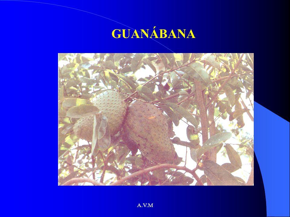 A.V.M GUANÁBANA