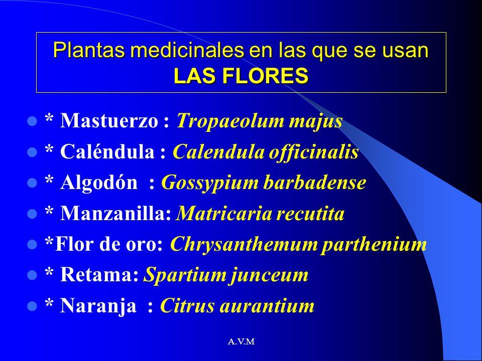 A.V.M Plantas medicinales en las que se usan LAS FLORES * Mastuerzo : Tropaeolum majus * Caléndula : Calendula officinalis * Algodón : Gossypium barba