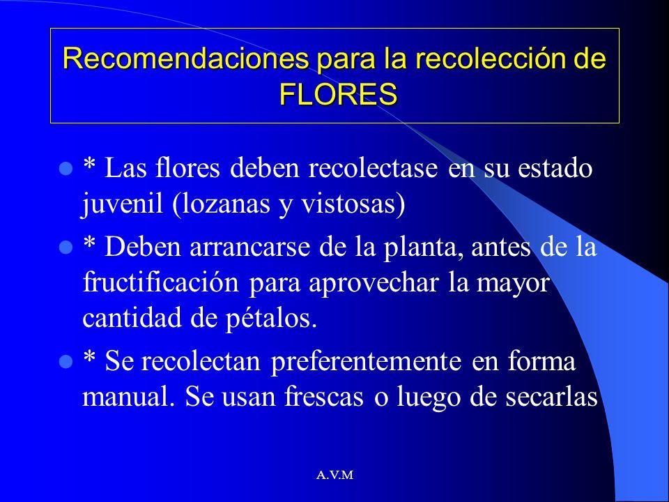 A.V.M Recomendaciones para la recolección de FLORES * Las flores deben recolectase en su estado juvenil (lozanas y vistosas) * Deben arrancarse de la