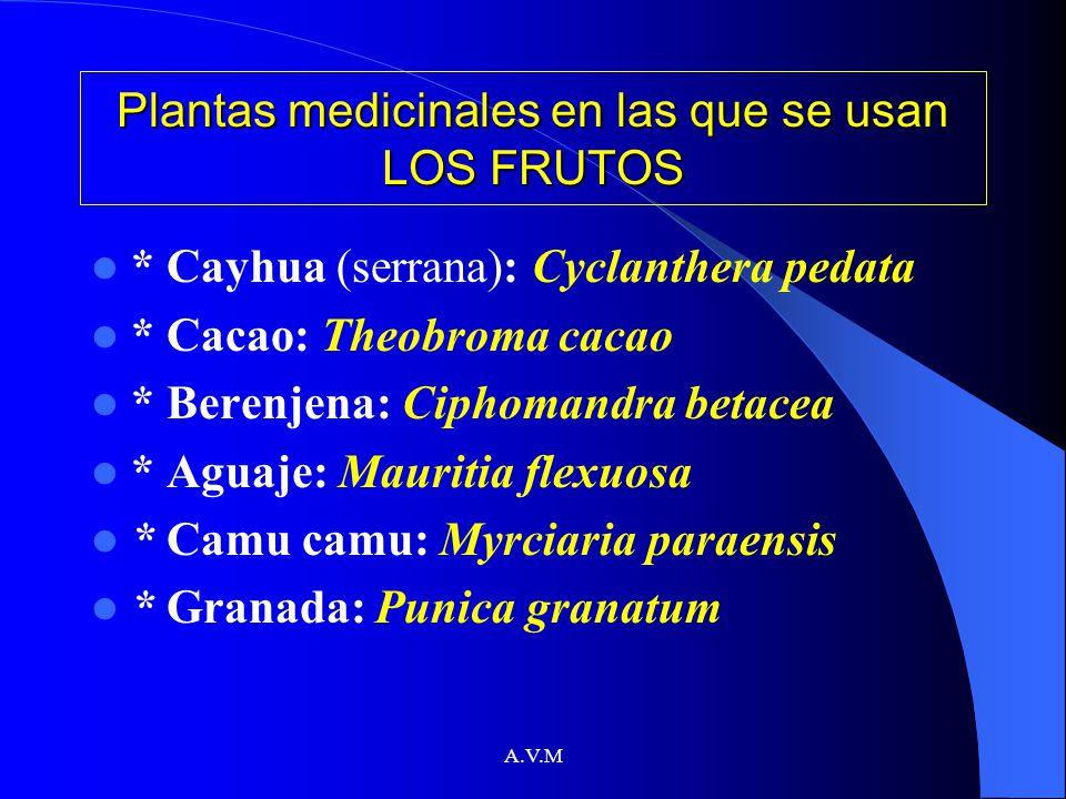 A.V.M Plantas medicinales en las que se usan LOS FRUTOS * Cayhua (serrana): Cyclanthera pedata * Cacao: Theobroma cacao * Berenjena: Ciphomandra betac
