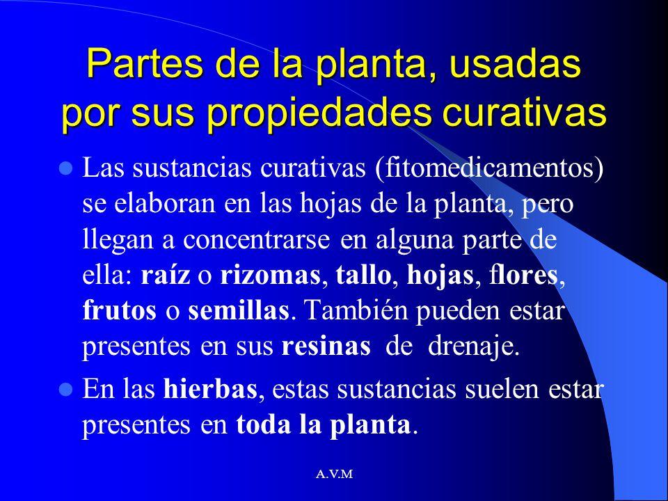 A.V.M Partes de la planta, usadas por sus propiedades curativas Las sustancias curativas (fitomedicamentos) se elaboran en las hojas de la planta, per