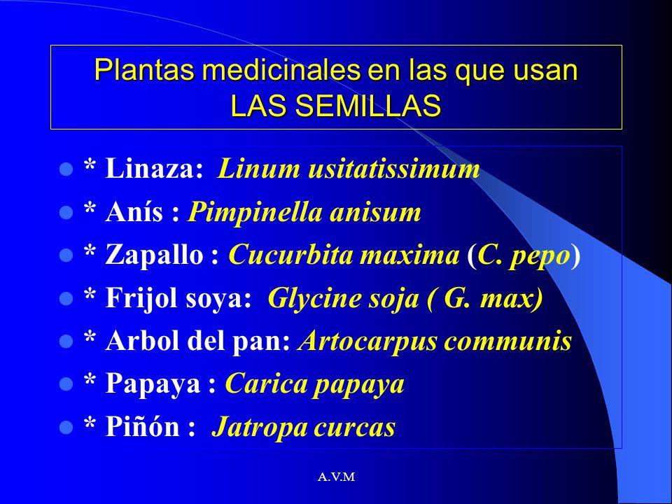 A.V.M Plantas medicinales en las que usan LAS SEMILLAS * Linaza: Linum usitatissimum * Anís : Pimpinella anisum * Zapallo : Cucurbita maxima (C. pepo)