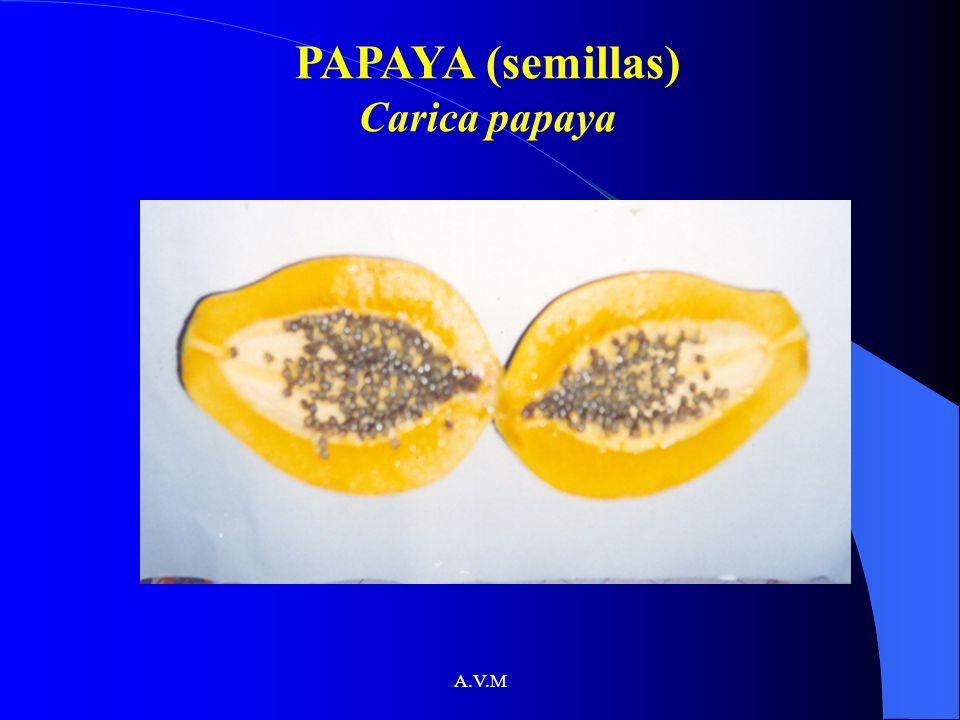 A.V.M PAPAYA (semillas) Carica papaya
