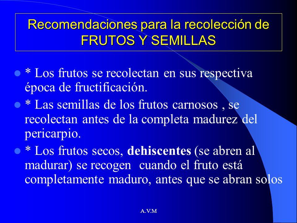 A.V.M Recomendaciones para la recolección de FRUTOS Y SEMILLAS * Los frutos se recolectan en sus respectiva época de fructificación. * Las semillas de