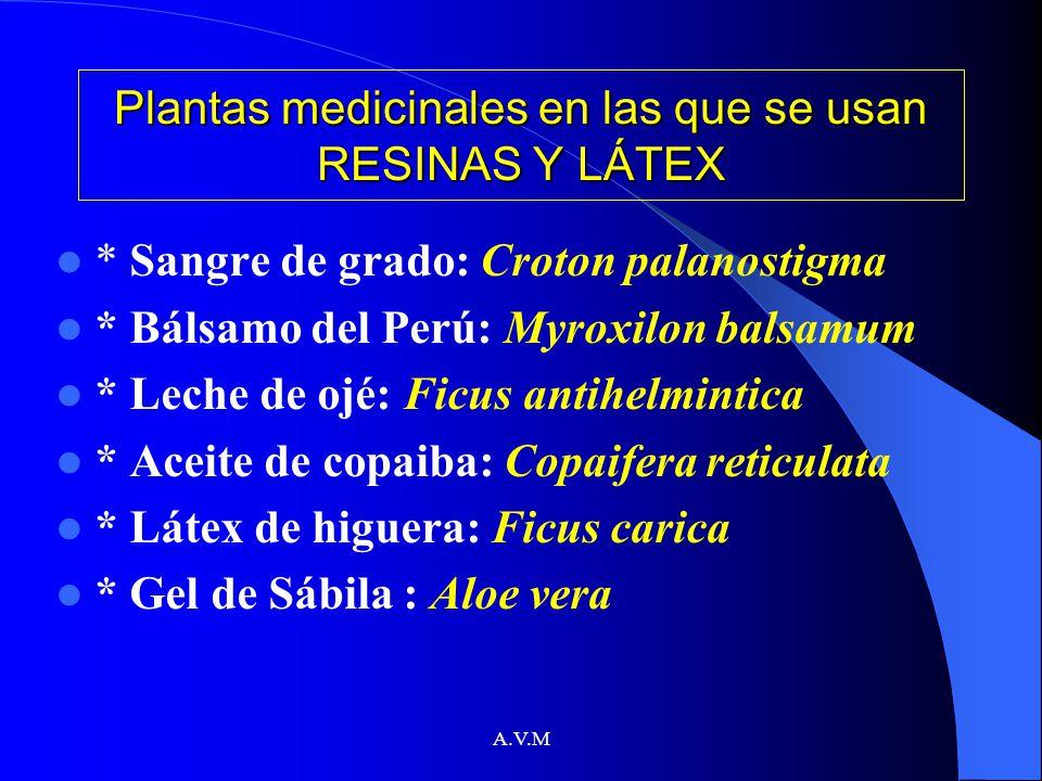 A.V.M Plantas medicinales en las que se usan RESINAS Y LÁTEX * Sangre de grado: Croton palanostigma * Bálsamo del Perú: Myroxilon balsamum * Leche de