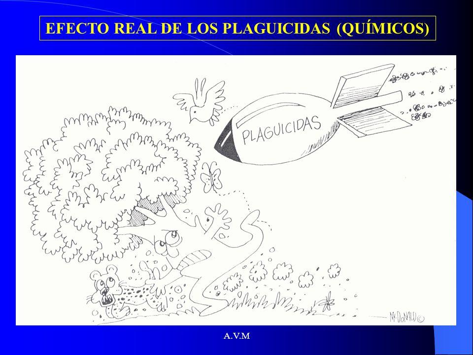 A.V.M EFECTO REAL DE LOS PLAGUICIDAS (QUÍMICOS)