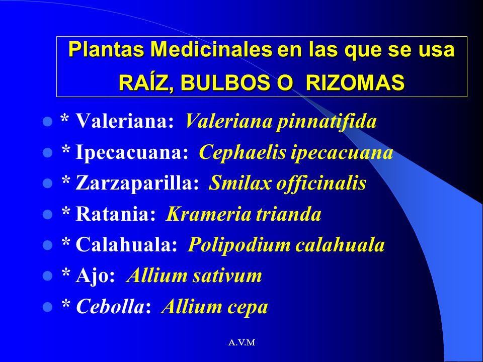 A.V.M Plantas Medicinales en las que se usa RAÍZ, BULBOS O RIZOMAS * Valeriana: Valeriana pinnatifida * Ipecacuana: Cephaelis ipecacuana * Zarzaparill