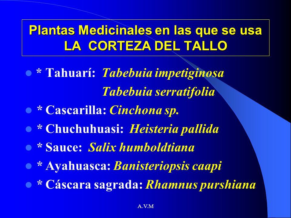 A.V.M Plantas Medicinales en las que se usa LA CORTEZA DEL TALLO * Tahuarí: Tabebuia impetiginosa Tabebuia serratifolia * Cascarilla: Cinchona sp. * C