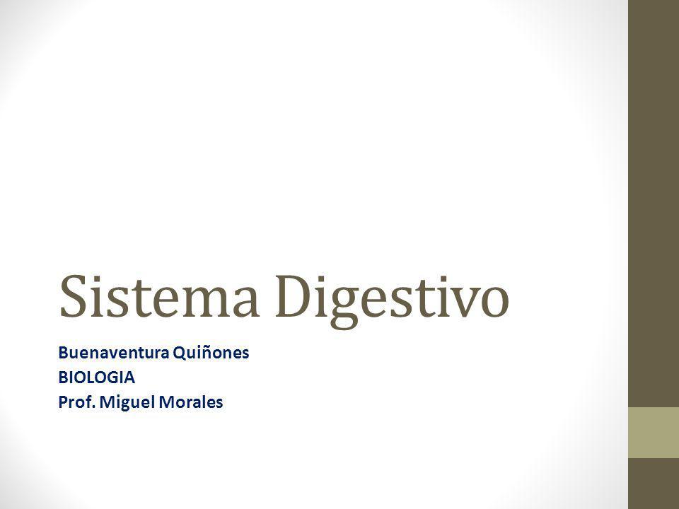 Sistema Digestivo Buenaventura Quiñones BIOLOGIA Prof. Miguel Morales