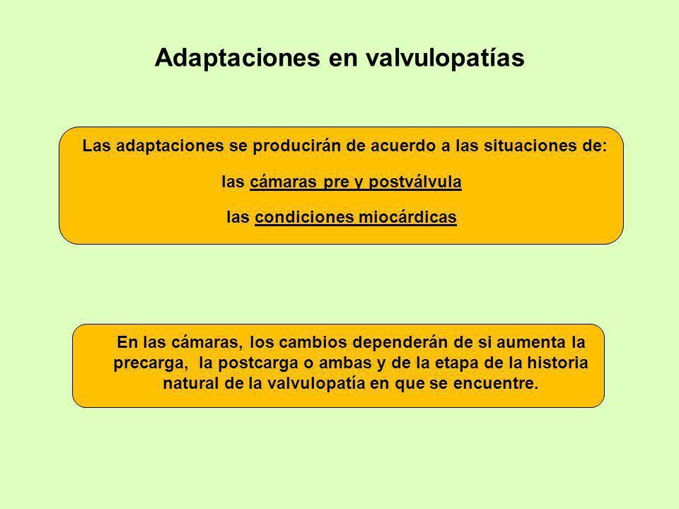 Adaptaciones en valvulopatías En las cámaras, los cambios dependerán de si aumenta la precarga, la postcarga o ambas y de la etapa de la historia natu
