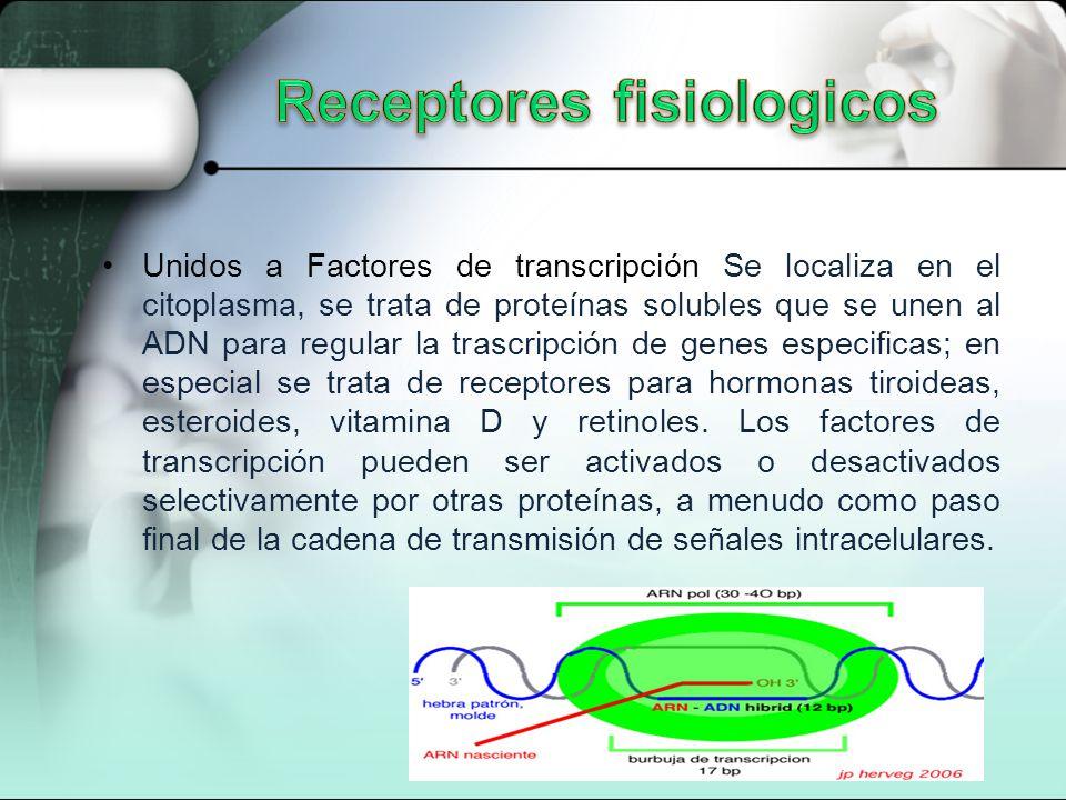 Unidos a Factores de transcripción Se localiza en el citoplasma, se trata de proteínas solubles que se unen al ADN para regular la trascripción de genes especificas; en especial se trata de receptores para hormonas tiroideas, esteroides, vitamina D y retinoles.