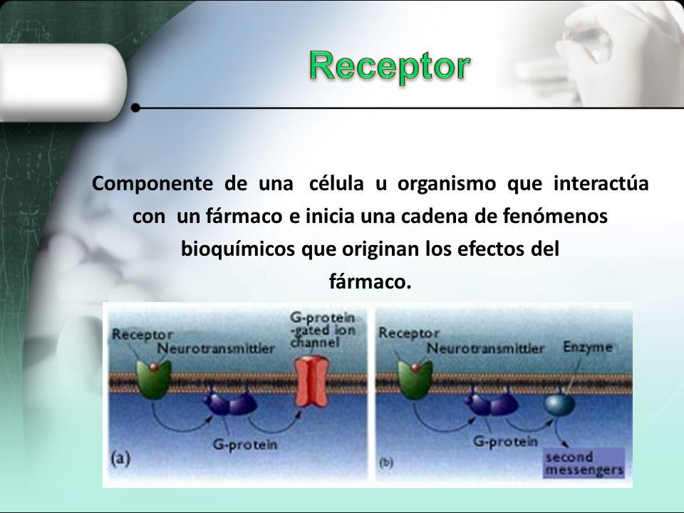 Componente de una célula u organismo que interactúa con un fármaco e inicia una cadena de fenómenos bioquímicos que originan los efectos del fármaco.