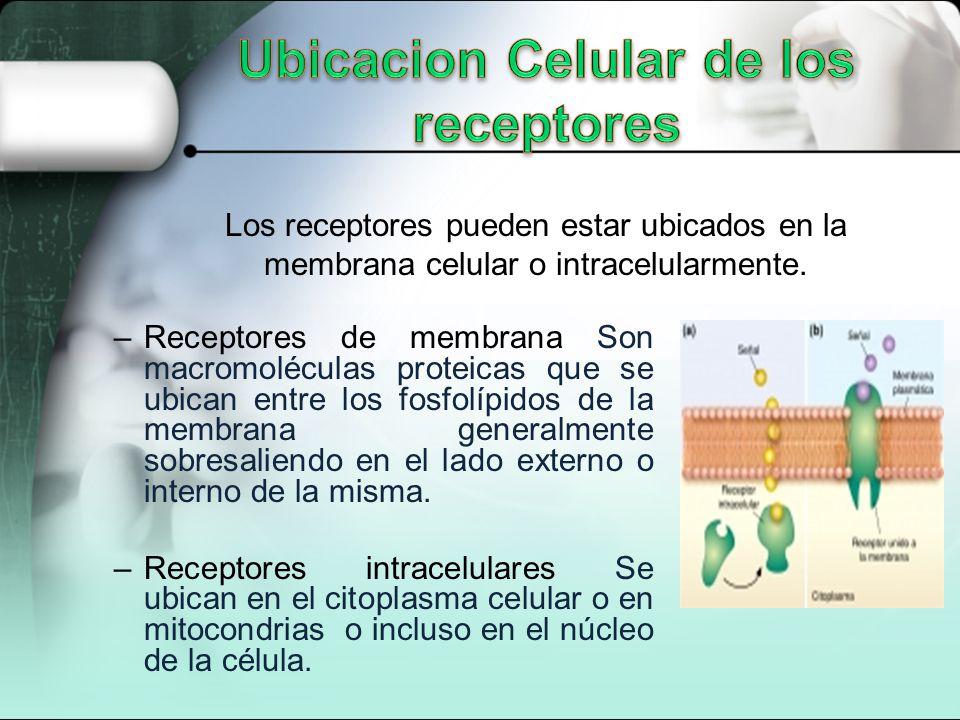 –Receptores de membrana Son macromoléculas proteicas que se ubican entre los fosfolípidos de la membrana generalmente sobresaliendo en el lado externo