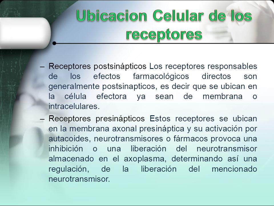 –Receptores postsinápticos Los receptores responsables de los efectos farmacológicos directos son generalmente postsinapticos, es decir que se ubican