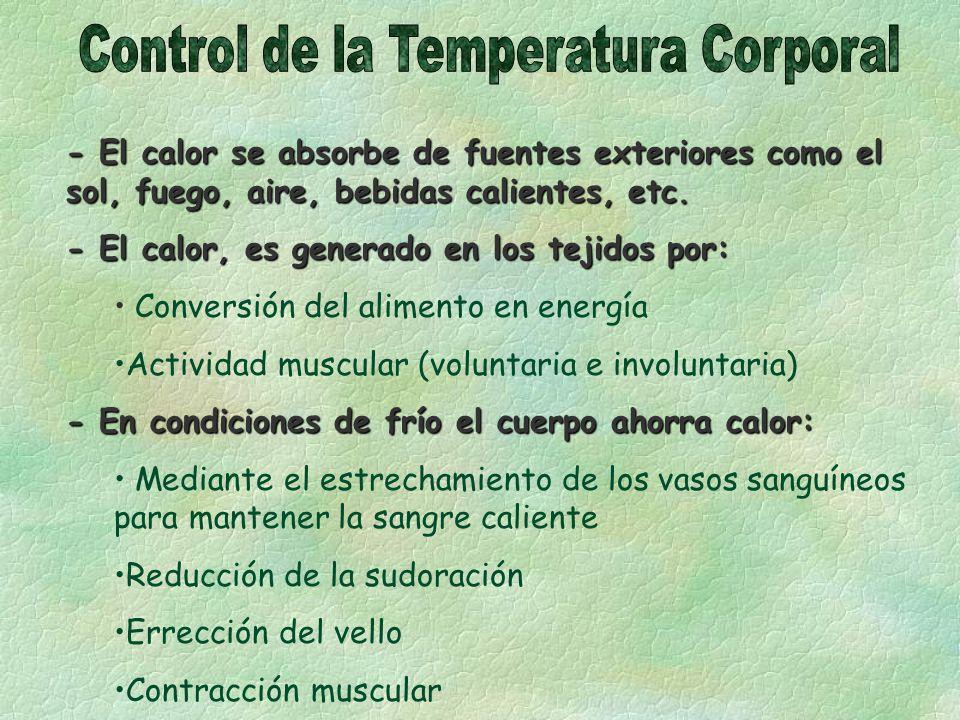 - El calor se absorbe de fuentes exteriores como el sol, fuego, aire, bebidas calientes, etc. - El calor, es generado en los tejidos por: Conversión d