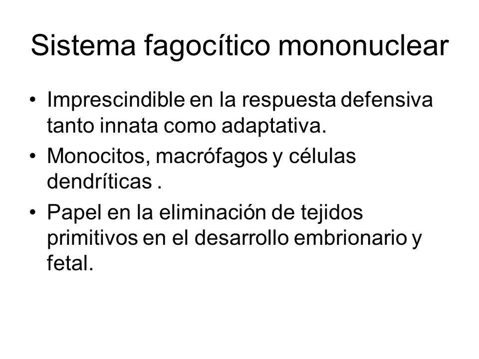Sistema fagocítico mononuclear Imprescindible en la respuesta defensiva tanto innata como adaptativa. Monocitos, macrófagos y células dendríticas. Pap