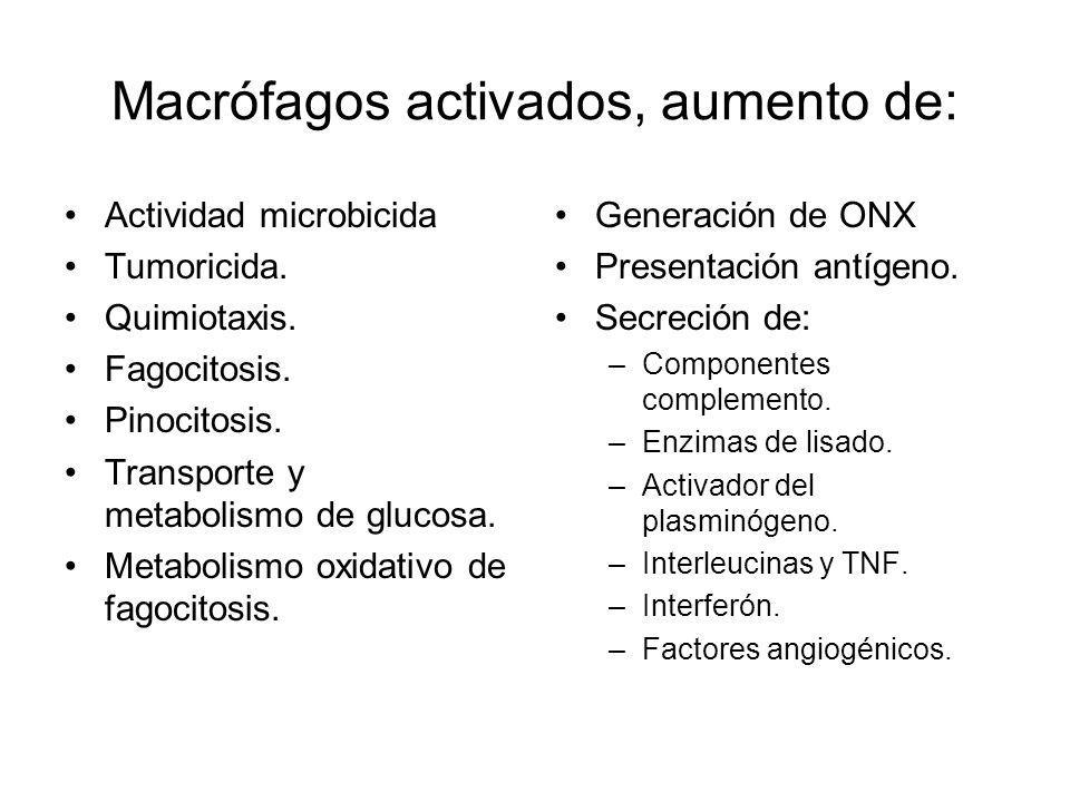 Macrófagos activados, aumento de: Actividad microbicida Tumoricida. Quimiotaxis. Fagocitosis. Pinocitosis. Transporte y metabolismo de glucosa. Metabo