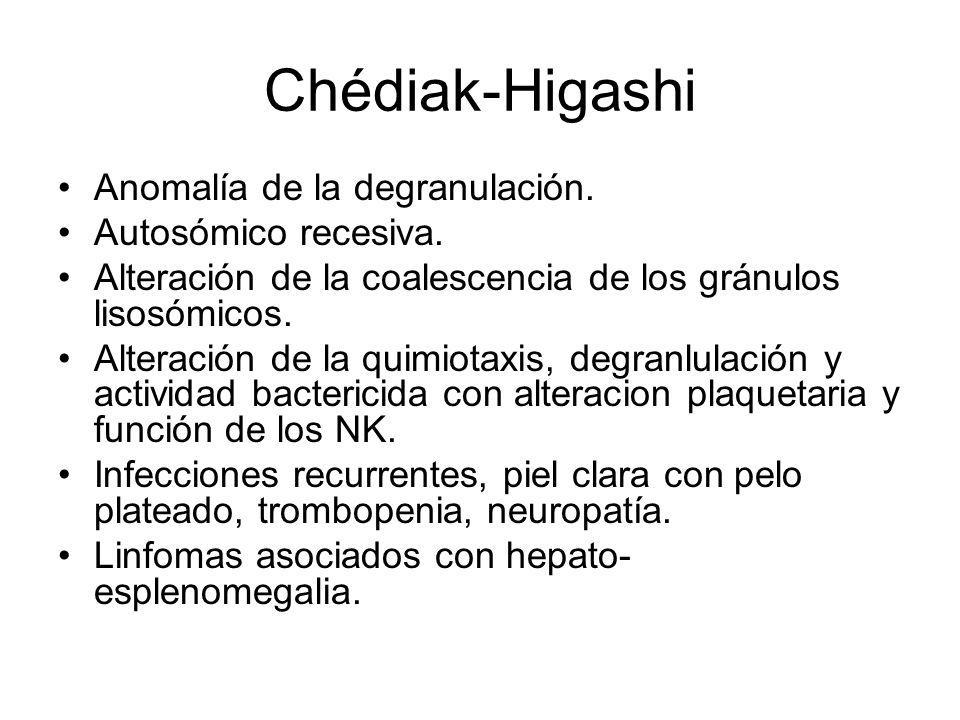 Chédiak-Higashi Anomalía de la degranulación. Autosómico recesiva. Alteración de la coalescencia de los gránulos lisosómicos. Alteración de la quimiot
