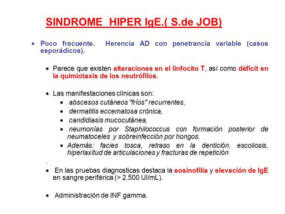 SINDROME HIPER IgE.( S.de JOB) Poco frecuente. Herencia AD con penetrancia variable (casos esporádicos). Parece que existen alteraciones en el linfoci
