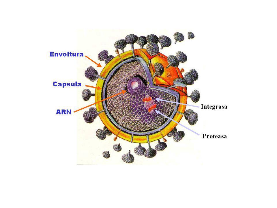 Síndrome de Inmunodeficiencia humana.