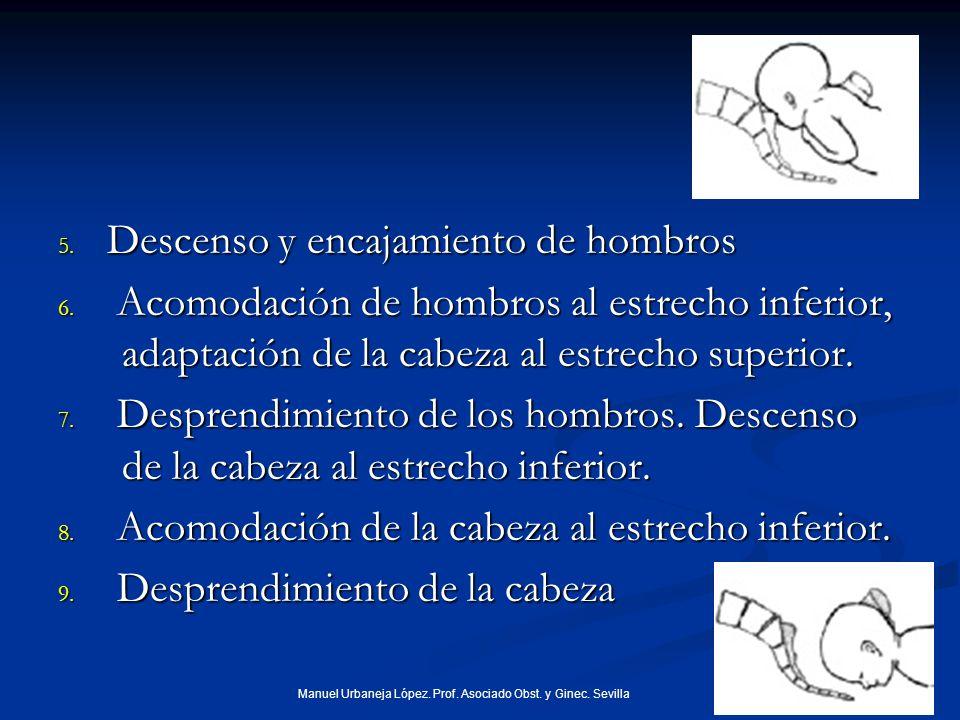 5.Descenso y encajamiento de hombros 6.
